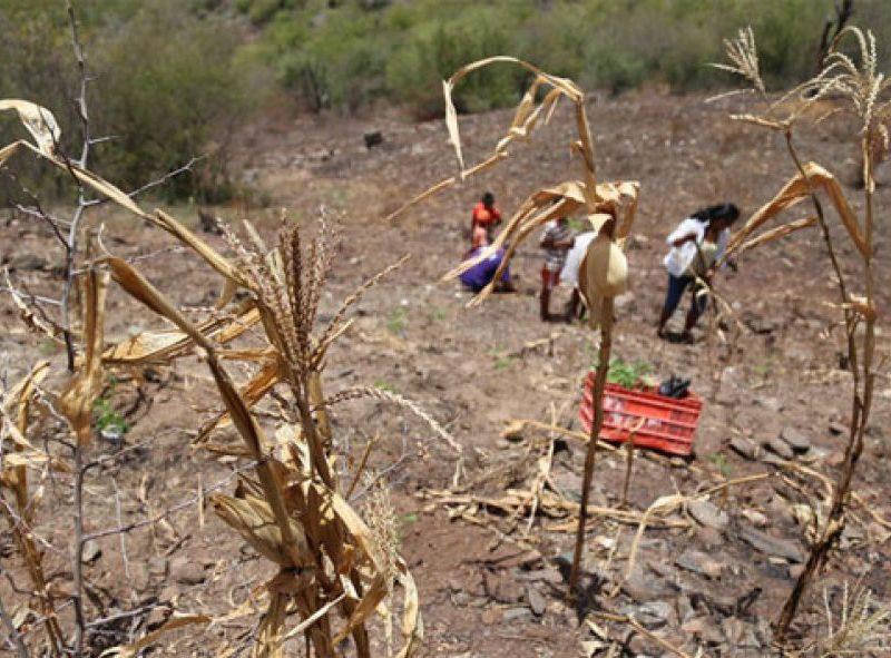 Guatemala sufre por sequedad en la tierra